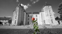 Rose parc Chateau